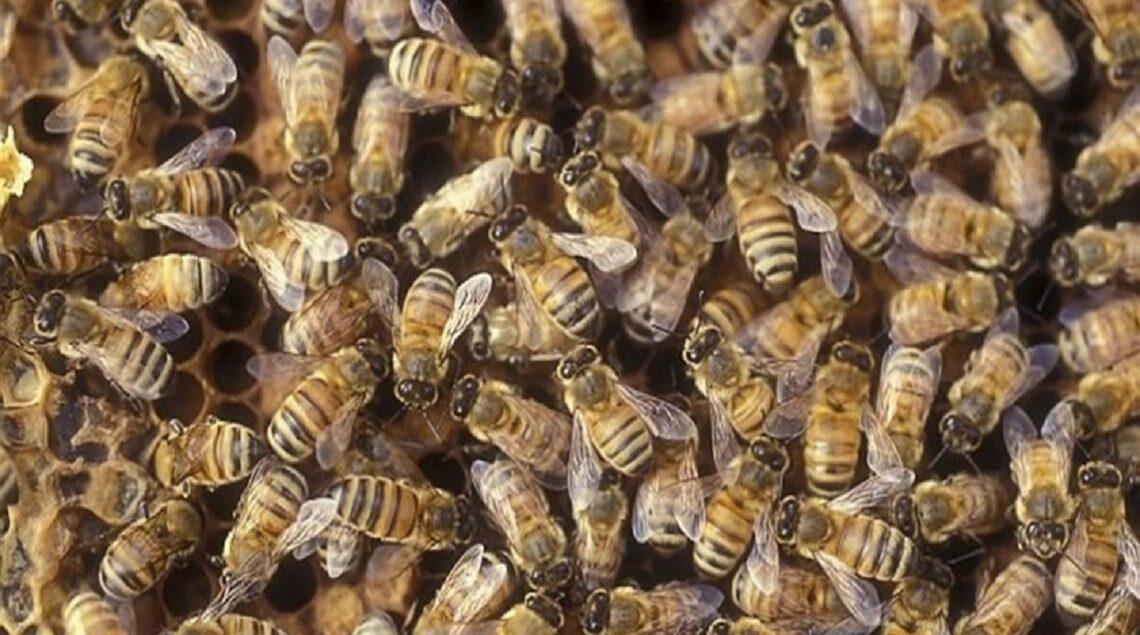 1 1 1140x635 - يعالج التجاعيد وارتفاع ضغط الدم.. تعرفي على فوائد لدغة النحل