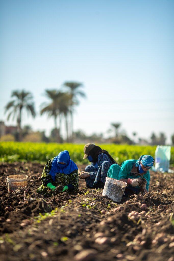 60a287d8 c6bc 452a 885f e8d849f879e5 682x1024 - شلباية: هدفنا إنشاء نظام زراعي مستدام يساهم في زيادة الإنتاج وضمان الأمن الغذائي وتحسين المعيشة في المناطق المستحقة