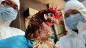 download - حقيقة ظهور بؤر جديدة من فيروس إنفلونزا الطيور H10 في مصر